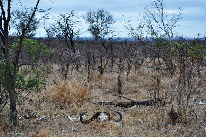 Van van Kruger Nationale Park, Limpopo en Mpumalanga provincies, Zuid-Afrika stock foto