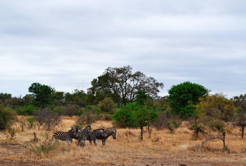 Van van Kruger Nationale Park, Limpopo en Mpumalanga provincies, Zuid-Afrika royalty-vrije stock foto's