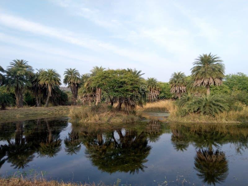 Van Vihar park narodowy Bhopal obraz royalty free