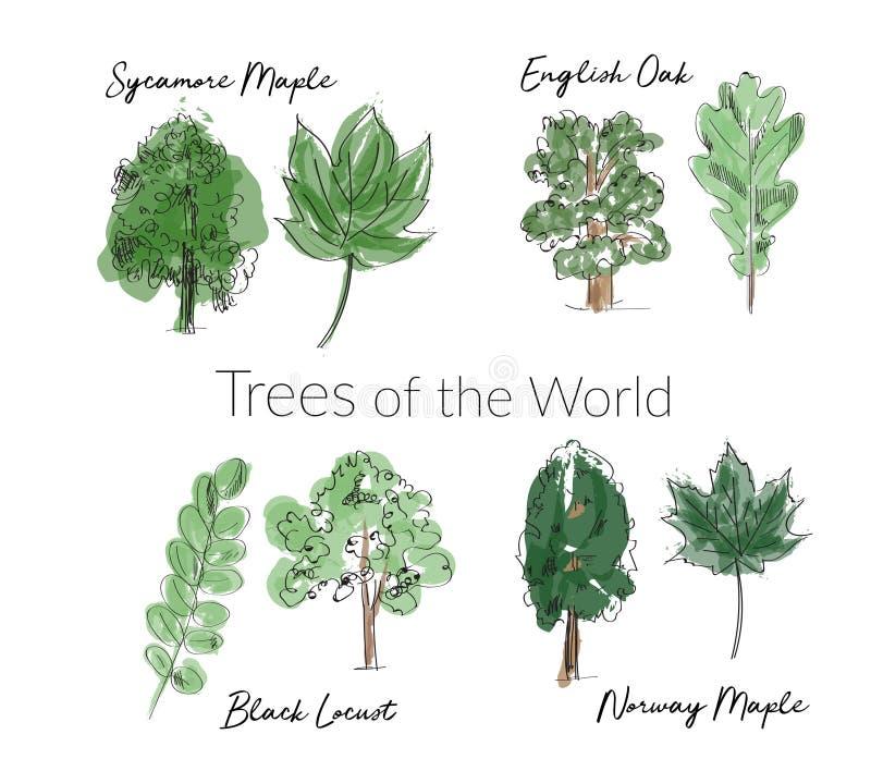 Van waterverfbomen en bladeren inzameling hand getrokken bosboom en bladschets vector illustratie