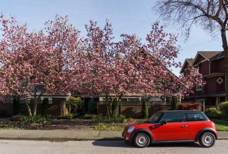 VANCOUVER, CANADA - April 19, 2018: De kers komt bomen en rode auto op de straat tot bloei royalty-vrije stock foto's