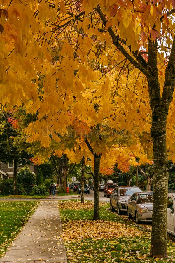 VANCOUVER, CANADA - October 1, 2018: street view residential area autumn time golden leaves. House town home road exterior facade fall housing landscape royalty free stock photos