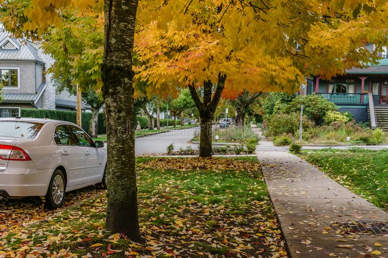 VANCOUVER, CANADA - October 1, 2018: street view residential area autumn time golden leaves. House town home road exterior facade fall housing landscape stock image