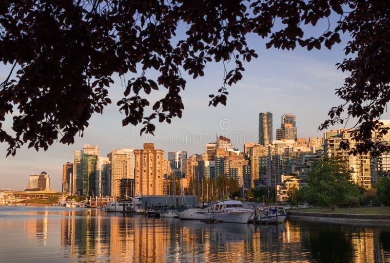 Vancouver du centre au coucher du soleil éclipsé par des branches d'arbre image libre de droits