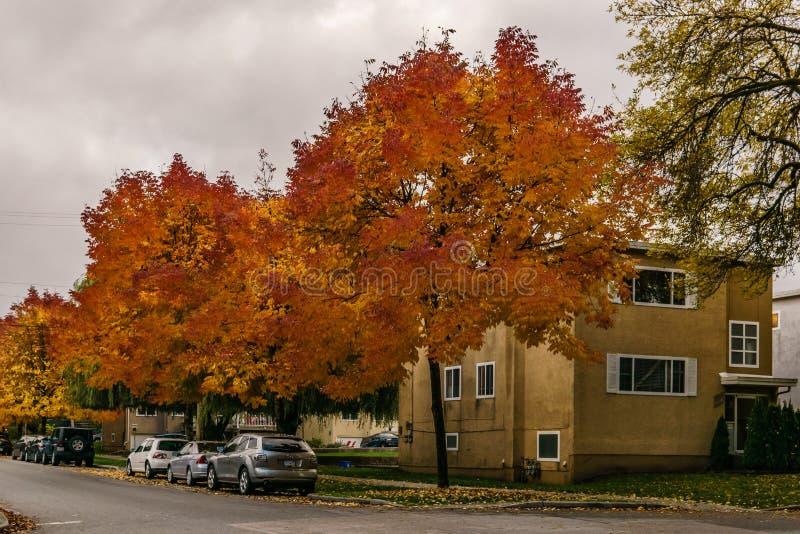 VANCOUVER KANADA - Oktober 1, 2018: sidor för tid för höst för gatasiktsbostadsområde guld- royaltyfria foton