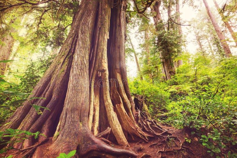 Vancouver skog royaltyfri bild
