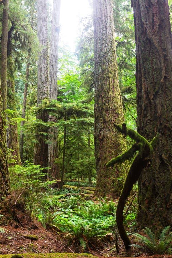 Vancouver skog arkivbild
