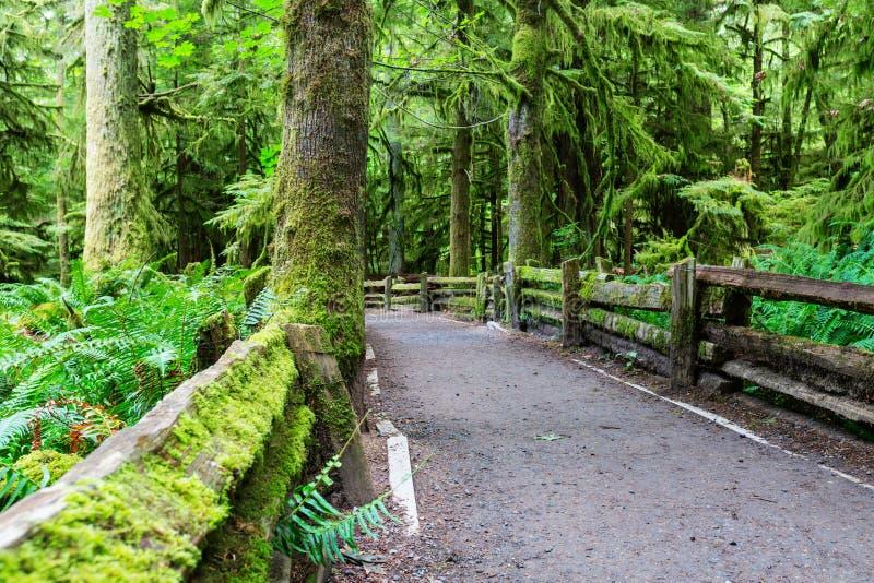 Vancouver skog arkivbilder