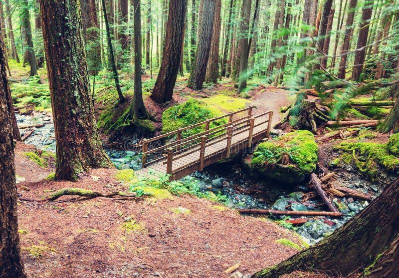 Vancouver skog royaltyfri foto