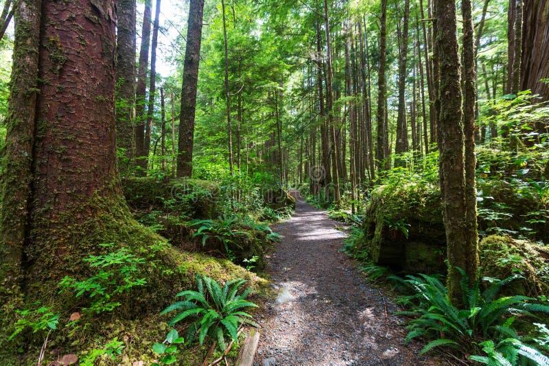 Vancouver skog fotografering för bildbyråer