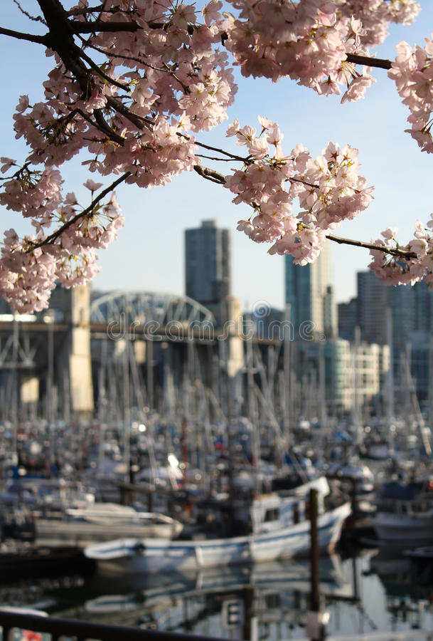 Vancouver Spring Blossoms royalty free stock images