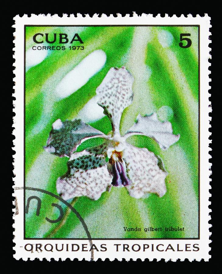 Vanda gilbert tribulet, Orchids serie, circa 1973. MOSCOW, RUSSIA - AUGUST 18, 2018: A stamp printed in Cuba shows Vanda gilbert tribulet, Orchids serie, circa stock images