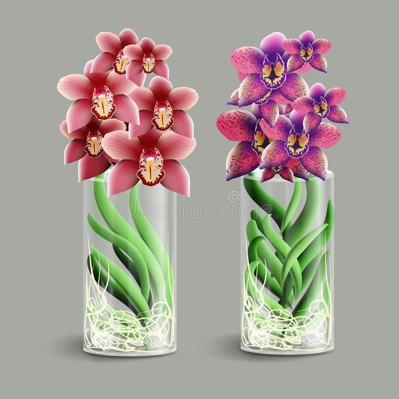Vanda Orchid In A Glass Vase Epiphyte Tropical Flower Element Of