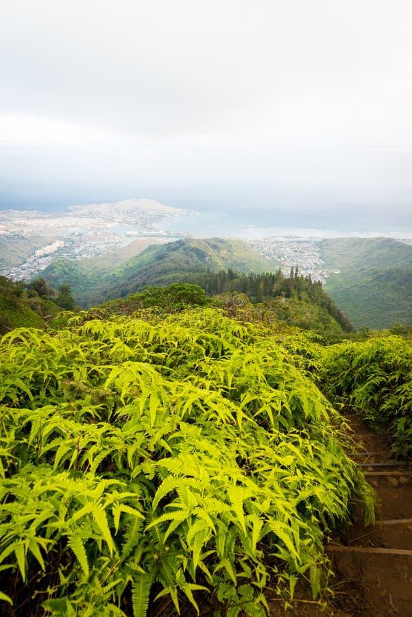 Vandring för naturbergslinga på Kuliouou Ridge i Honolulu, Hawaii royaltyfri bild