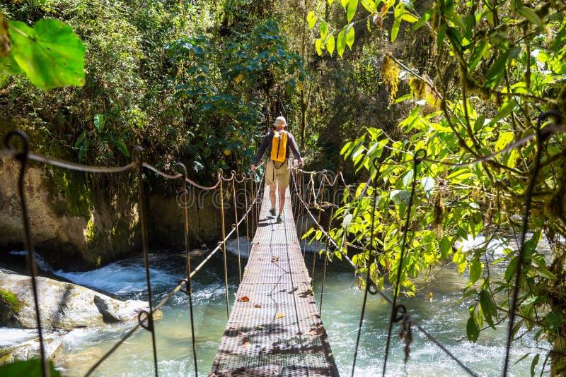 Vandring i Costa Rica arkivfoto
