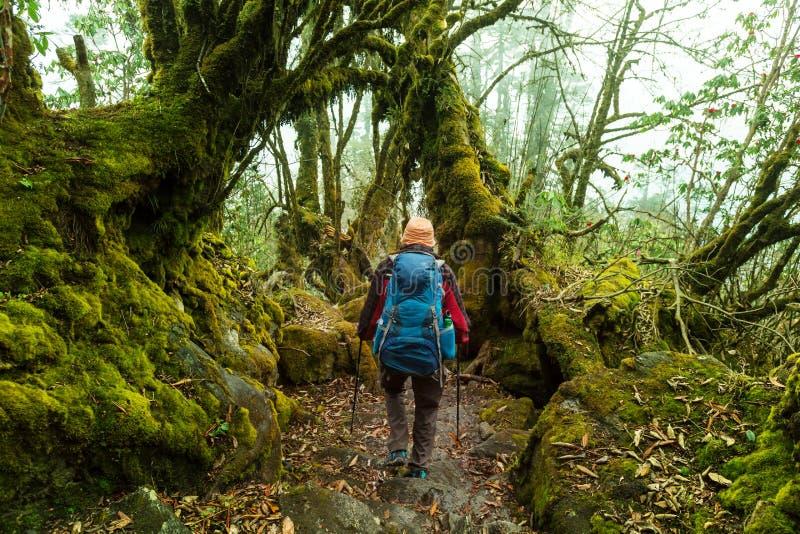 Vandring i den Nepal djungeln royaltyfria bilder