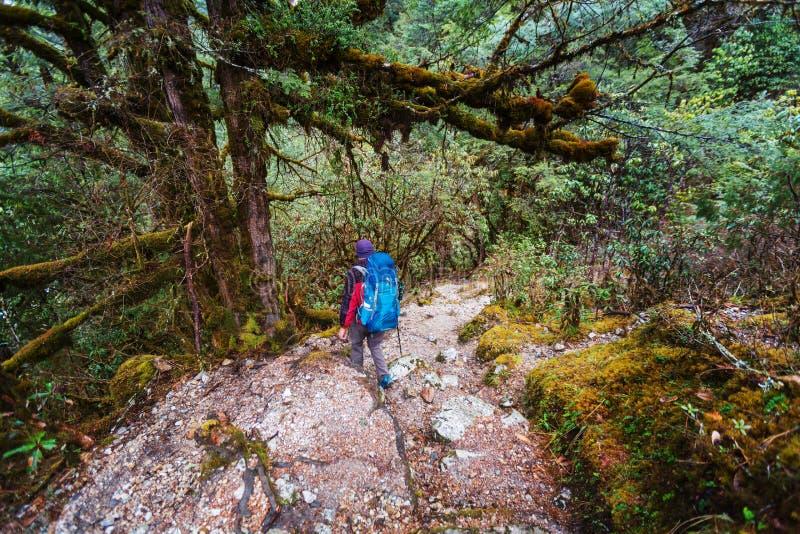 Vandring i den Nepal djungeln arkivfoto