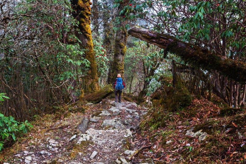 Vandring i den Nepal djungeln arkivbilder