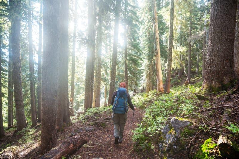 Vandring i skogen arkivfoto