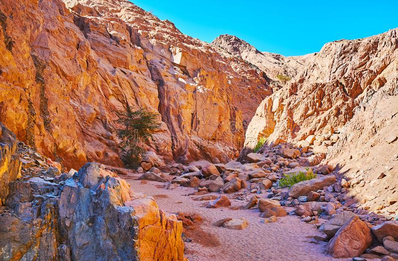 Vandringen till den Sinai öknen, Egypten royaltyfri foto