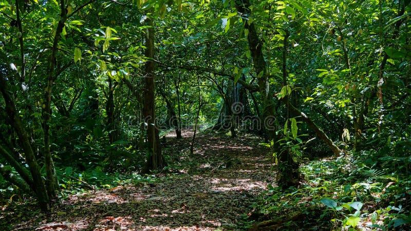 Vandringsled in i djungeln med tät vegetation royaltyfri fotografi