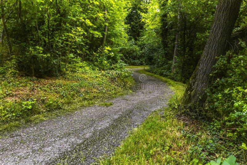 Vandringsled i grön skog av Wienerwald nära Wien royaltyfria bilder