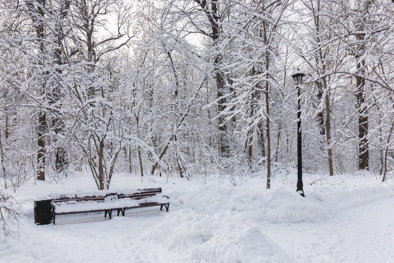 Vandringsled i Moskvastaden parkerar Trees i snow Vinter soligt frostigt arkivbilder