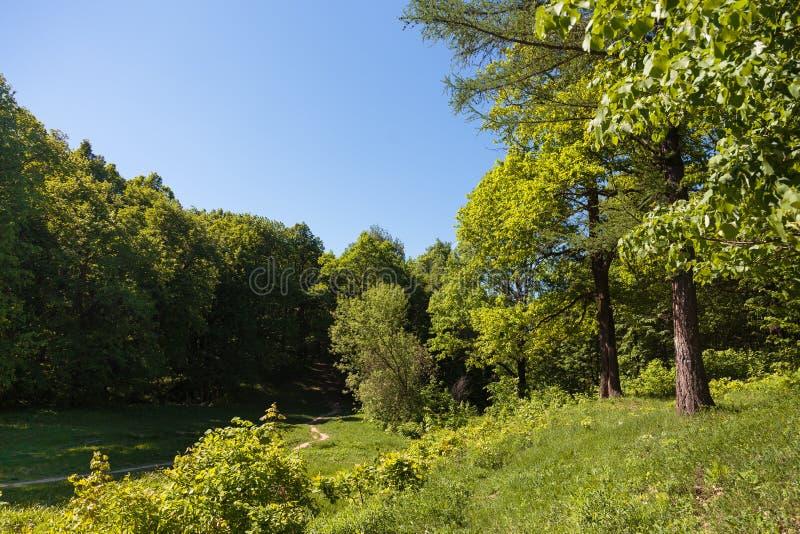 Vandringsled till och med naturlig skog av träd royaltyfria bilder