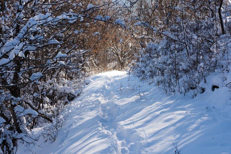 Vandringsledet i djup snö till och med snö täckte skogen royaltyfri fotografi