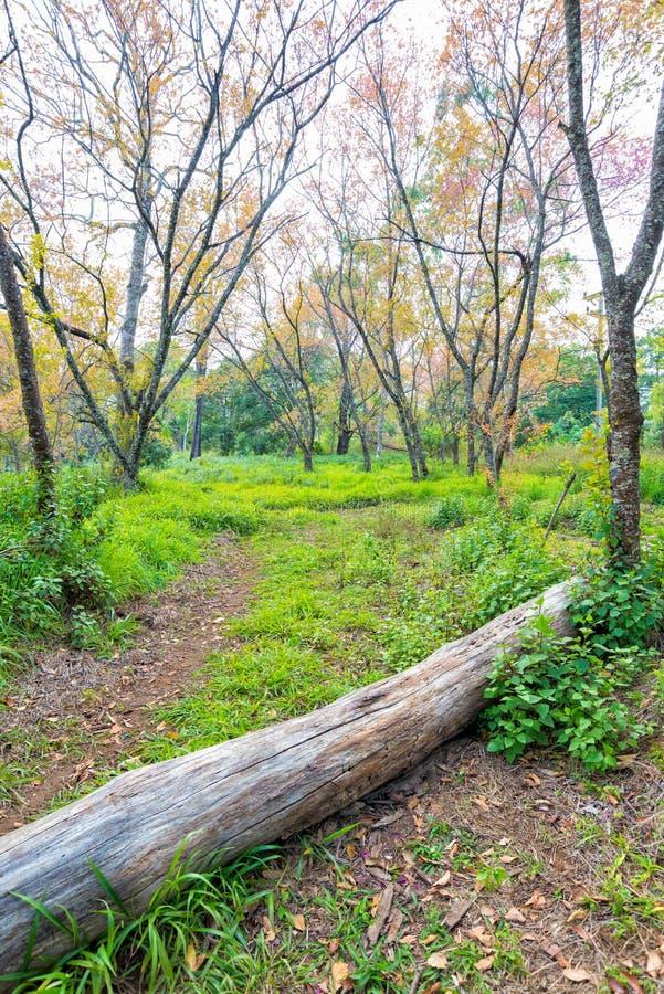 Vandringsledväg till skogen med trädet i gräsfält arkivbild