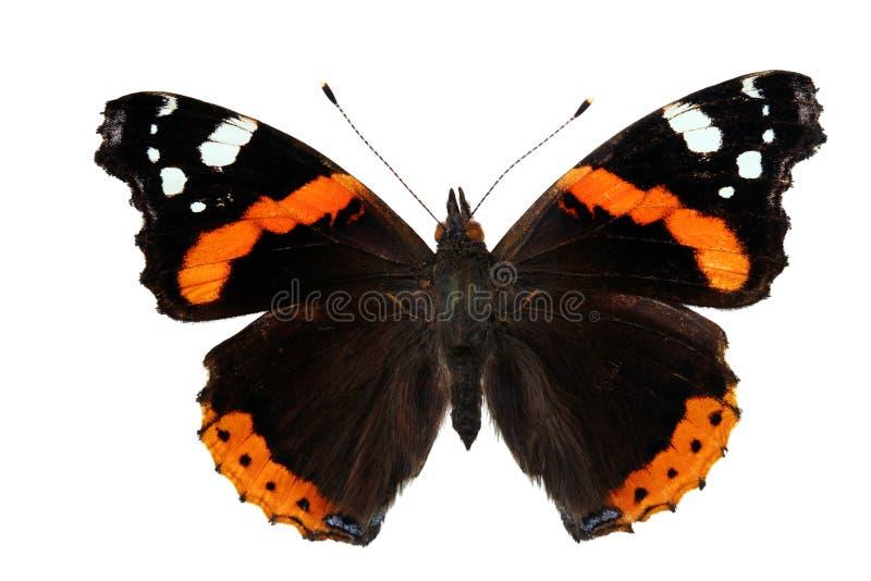 vanessa бабочки atalanta стоковые фотографии rf
