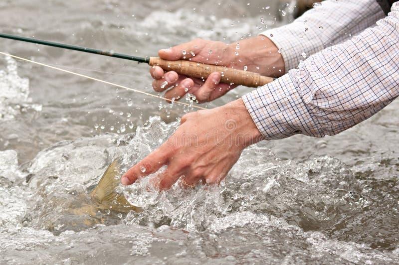 Vangst en versie: vissen staart stock foto's