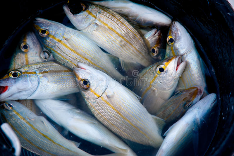 Vangst van de dag stock afbeeldingen