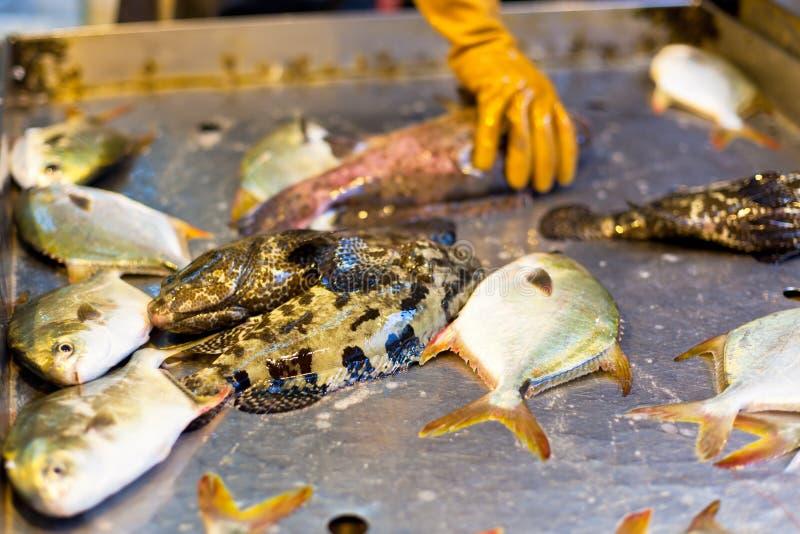 Verse Vissen bij Lokale Aziatische Markt royalty-vrije stock fotografie