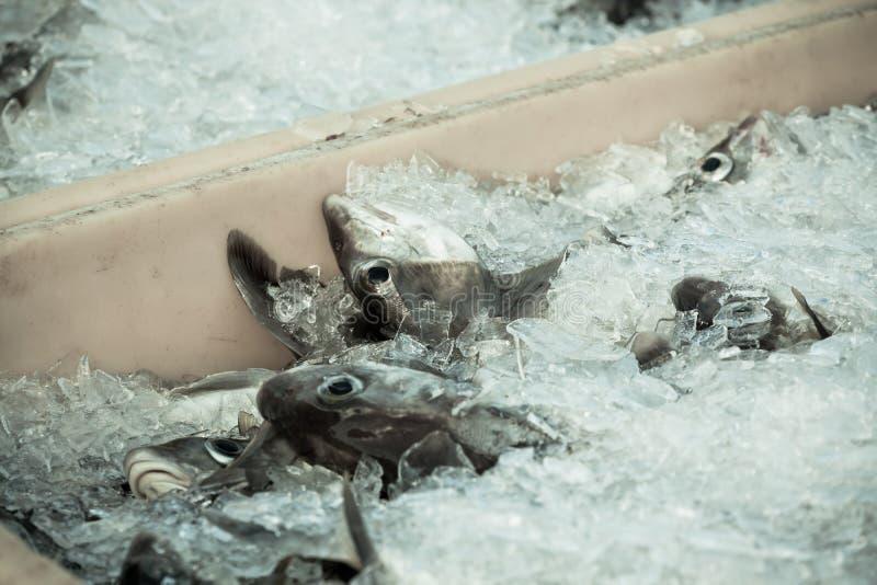 Vangst van de dag - Verse Vissen in Verschepende Container stock afbeeldingen