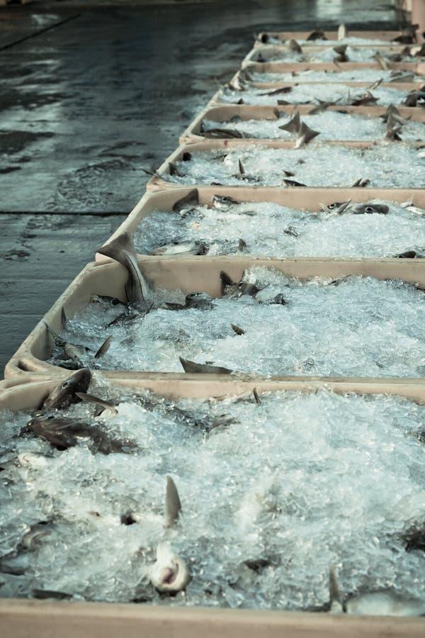 Vangst van de dag - Verse Vissen in Verschepende Containers stock afbeeldingen
