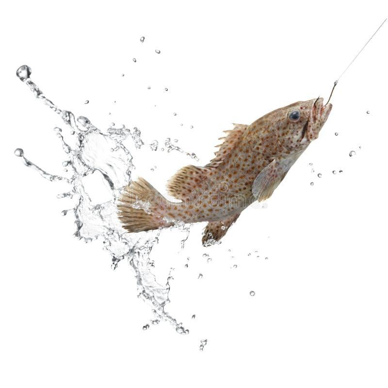 Vangst van vissen royalty-vrije stock fotografie