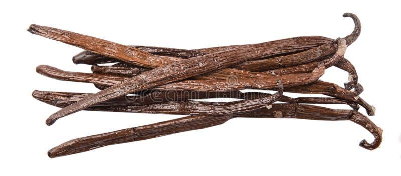 Vaniglia Bean Pods II immagini stock libere da diritti