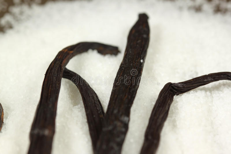 Vaniglia e zucchero immagine stock
