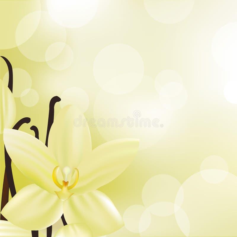 vanilj royaltyfri illustrationer
