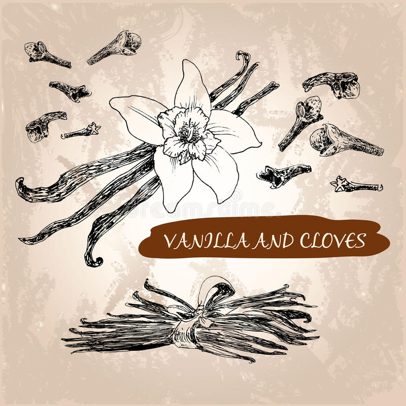 Vanilj och kryddnejlikor stock illustrationer