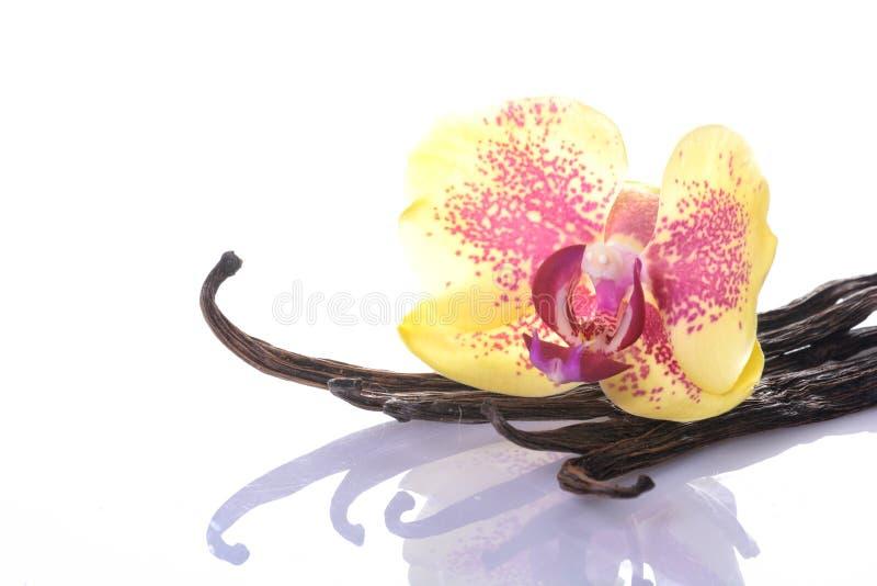 Vaniljböna och blomma arkivbild