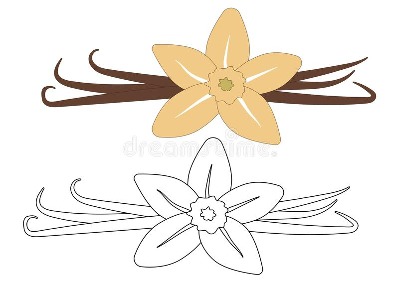 Vaniljblomma och fröskidor som är färgrika och i vit- och svartfärger royaltyfri illustrationer