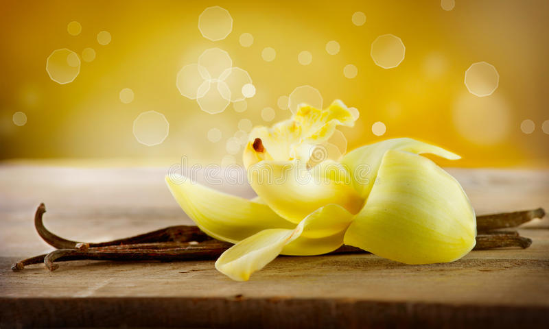 Vaniljfröskidapinnar och blomma royaltyfria foton