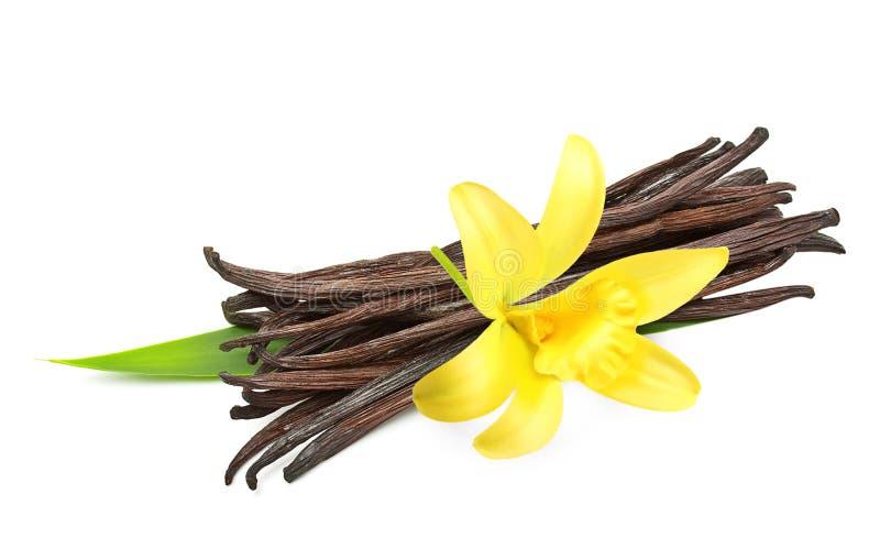 Vaniljfröskidor och blomma royaltyfri foto