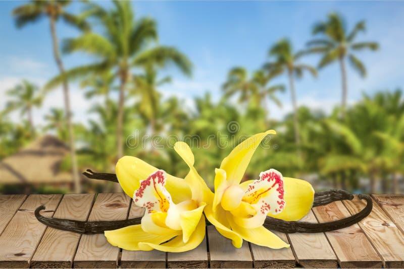 Vaniljfröskidor och blommor över träbakgrund arkivfoton