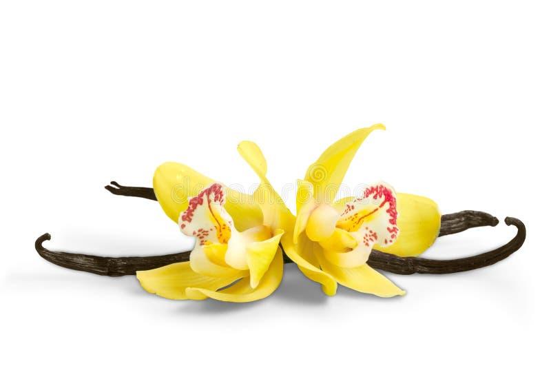 Vaniljfröskidor och orkidéblommor som isoleras på vit royaltyfria foton