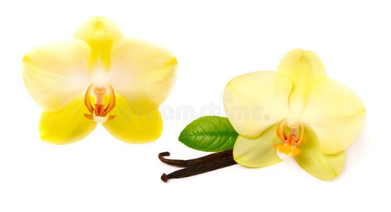 Vaniljpinnar med blomman arkivfoton