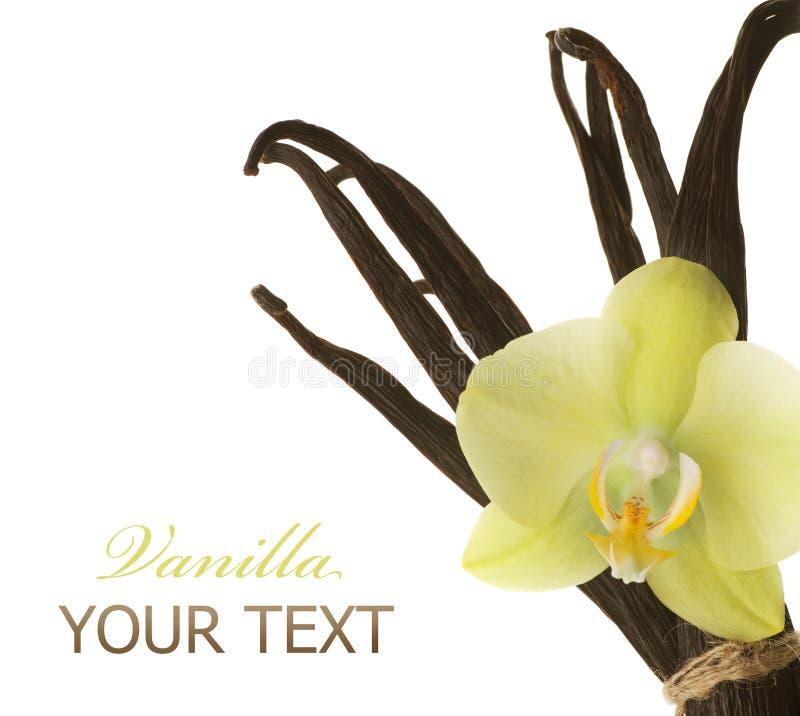Vanilla royalty free stock photos