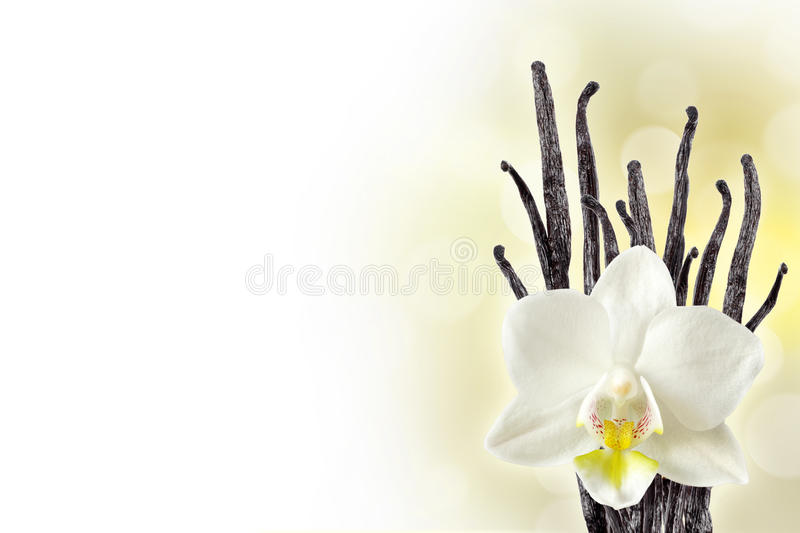 Vanilla background. Vanilla beans and orchid flower stock photography